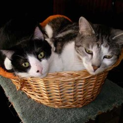 cats resting in basket
