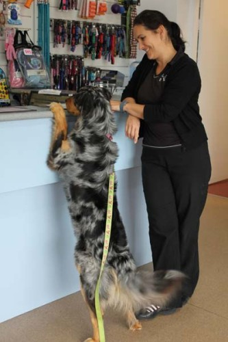 Preventive pet care at Merewether Vet