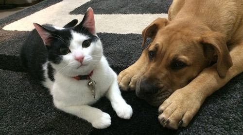 puppy & kitten behaviour training
