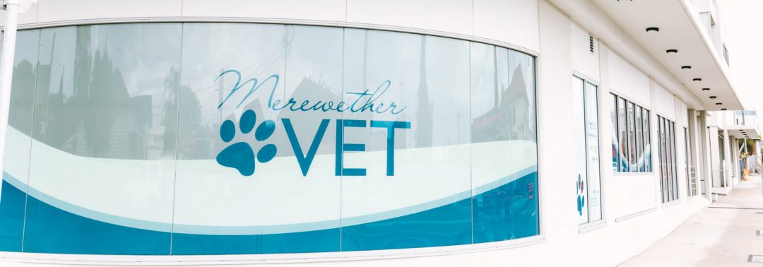 Merewether Vets on Llewellyn St, Merewether