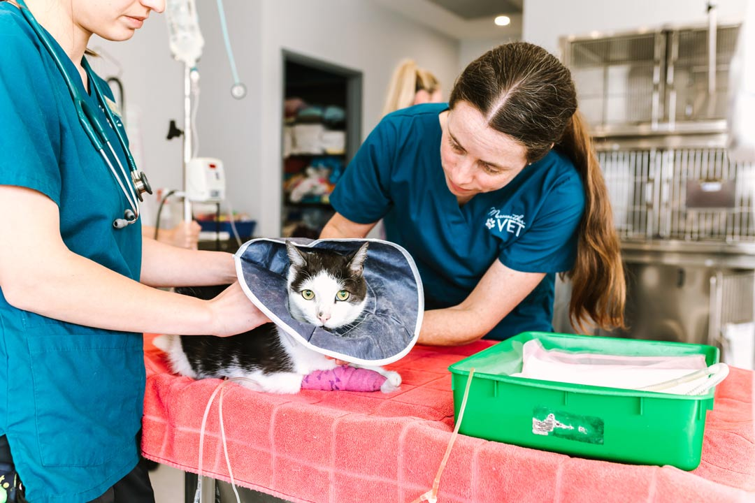 medical and surgical veterinary services