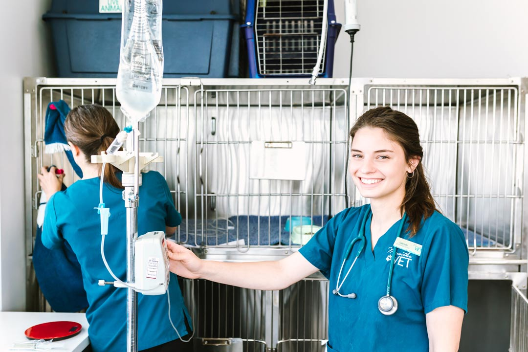 health and wellbeing veterinary services