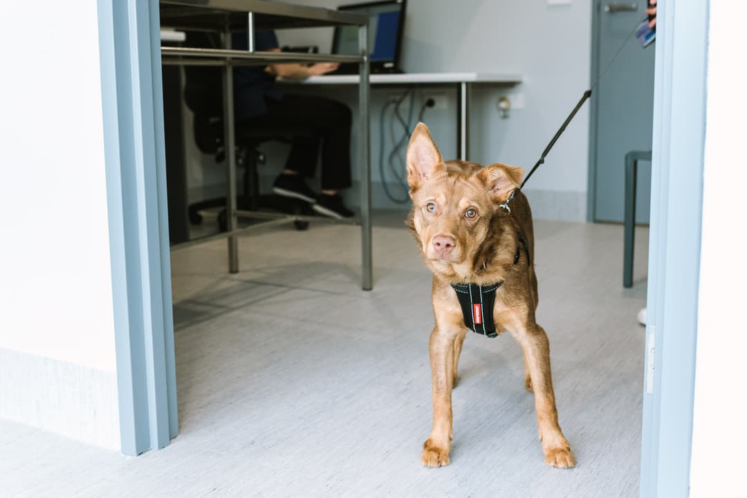 Vaccinations for dogs and cats Newcastle